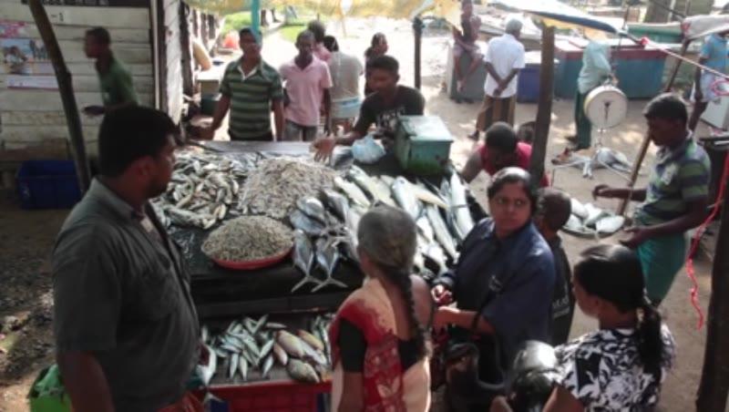 Fish market at Galle in Sri Lanka 1