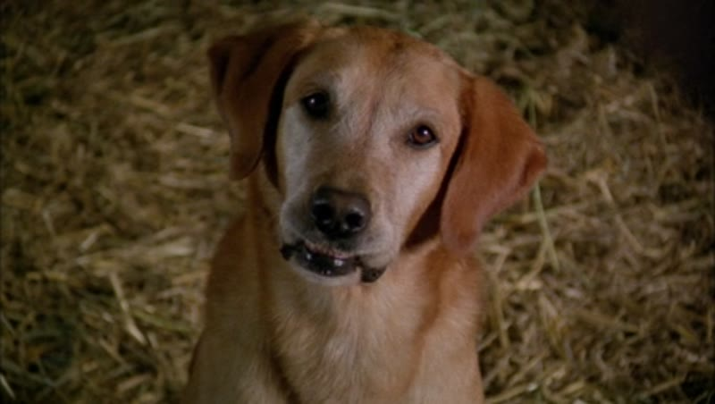 Close up of dog's face looking at camera, sitting on hay