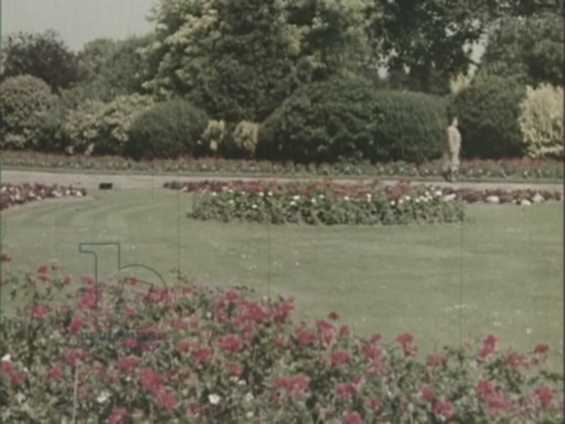 Green Islands, 1954, part 4 - flower gardens in London parks, Autumn arrives