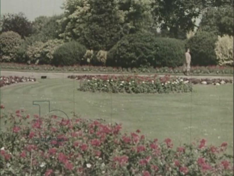 Green Islands, 1954, part 4 - flower gardens in London parks, Autumn arrives