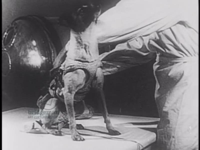Russian Space Program Canine Research, featuring dogs Laika, Albina and Mushka 1950s