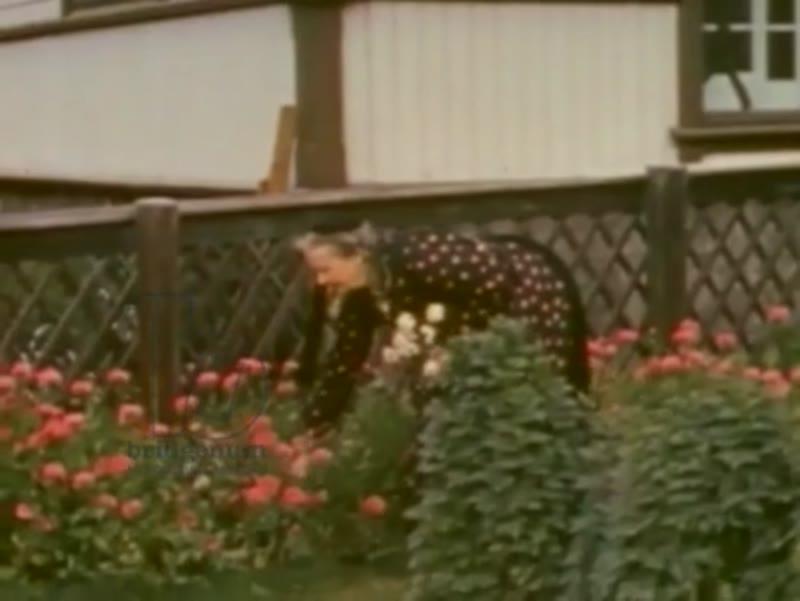 Bridgeman Footage; Spring