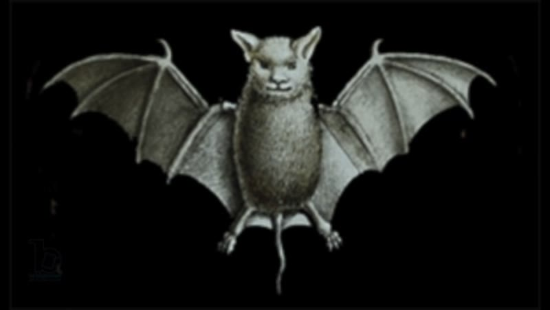 Animated 19th century magic lantern slide with bat flapping its wings
