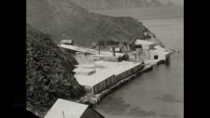 New Zealand Whaling - the Perano family whaling operation 1930 part 1