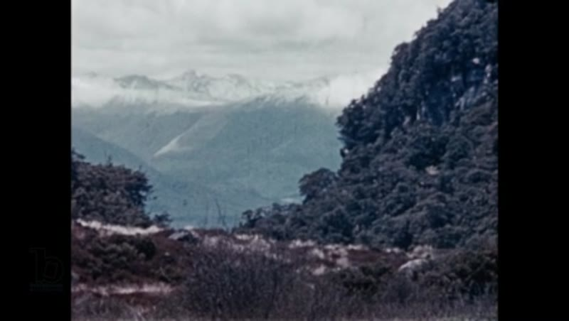 Rediscovering the 'extinct' takahē bird in New Zealand's Murchison Mountains, 1948 part 2