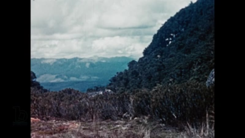 Rediscovering the 'extinct' takahē bird in New Zealand's Murchison Mountains, 1948 part 1