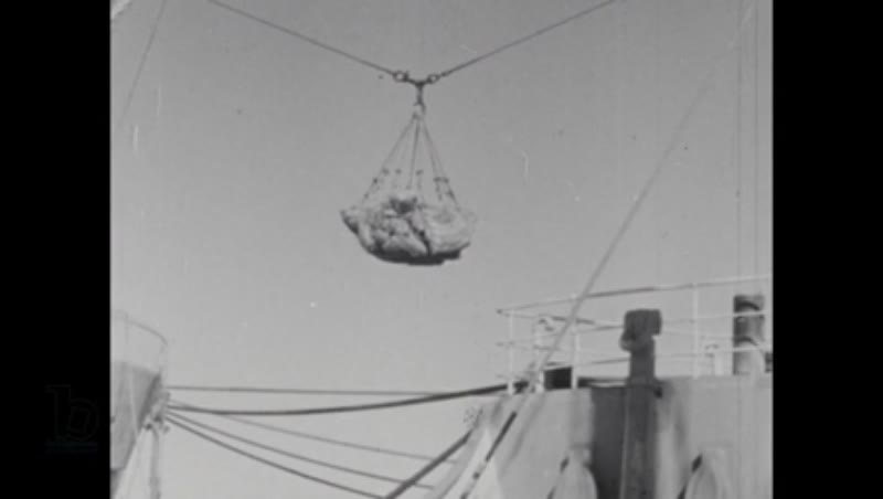 1940s documentary on whaling operations in Antarctica part 5