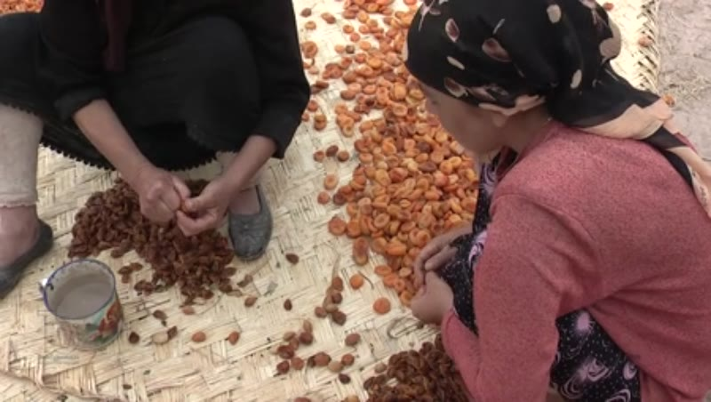 Dried apricots, Kashgar, China 2