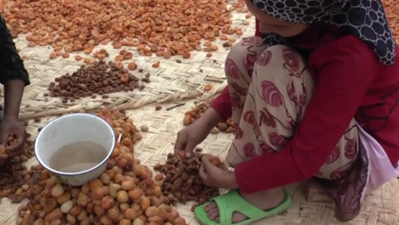 Dried apricots, Kashgar, China 1