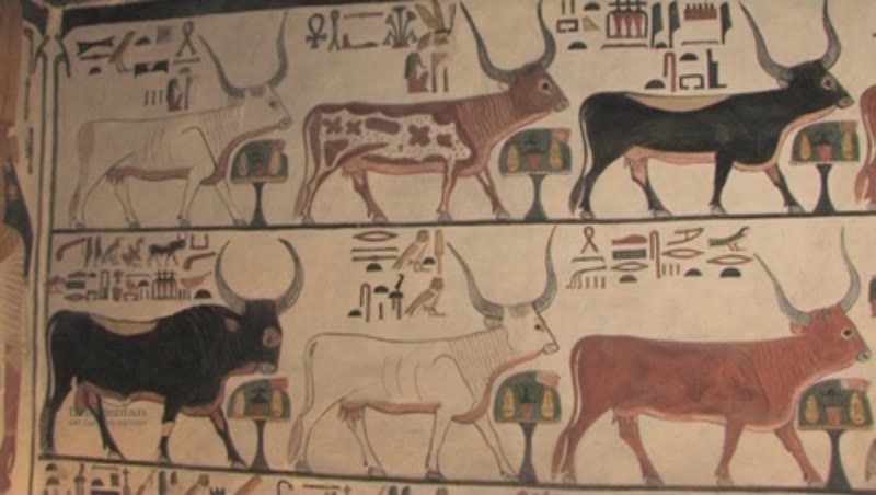 Painted Oxen on the walls of the Tomb of Merenptah