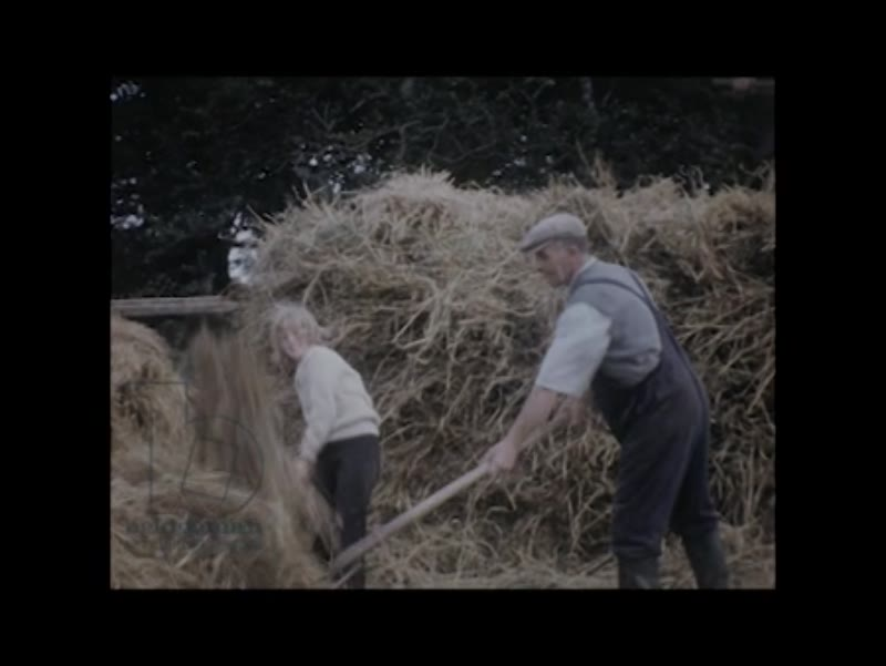 EDIT DED1163371 Farming family stacking hay in Tarbert, Ireland, c 1964