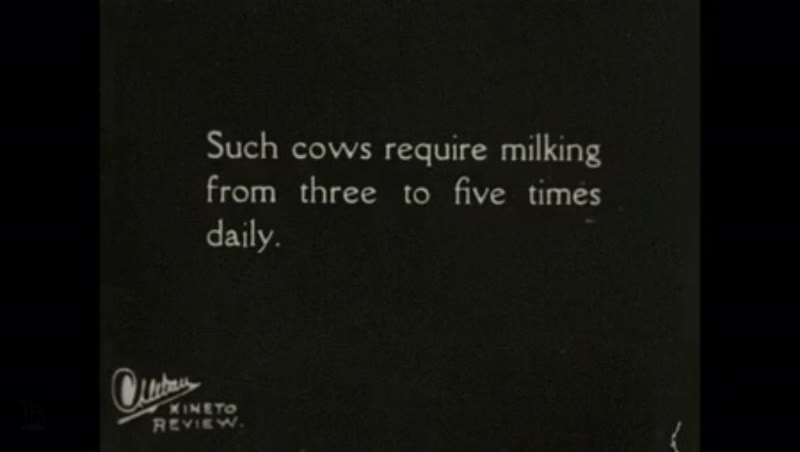1930s: UNITED STATES: rationing of food for cows.