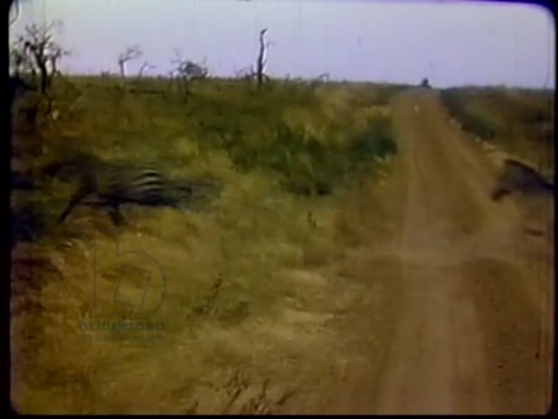 Adventures with African Wildlife: Tanzania, Kenya, Africa, c.1978