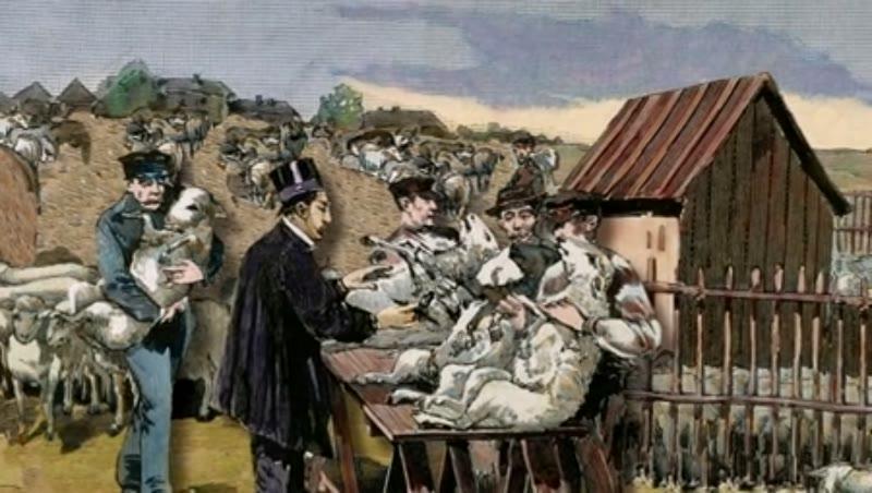 Louis Pasteur vaccinating sheep agaisnt anthrax