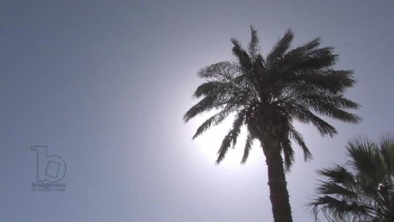 Palm trees against the sun, Karnak