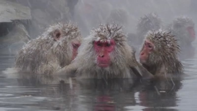 enjoy a hot bath