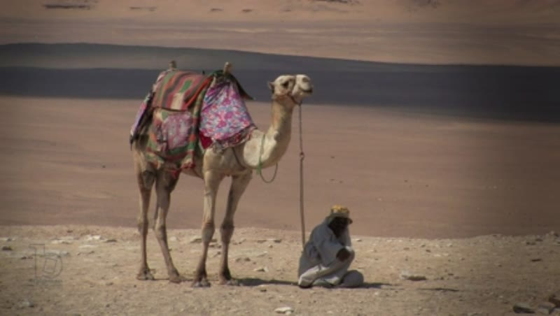 Man and camel in Giza 1