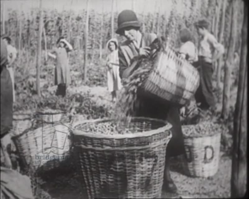 Hop farming in Kent - men women and children picking hops